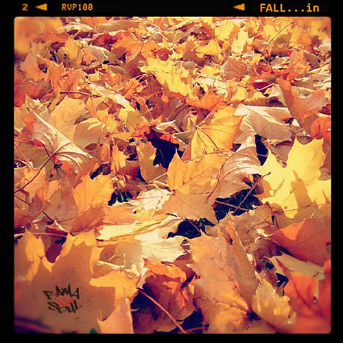 BamaLoveSoul Presents – FALL…in [Download]